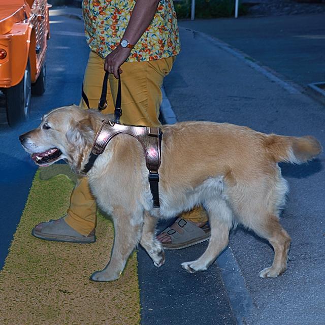 Bardatura per cane, taglia M